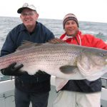 Large Rockfish or Striped Bass