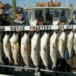 catching rockfish on the Chesapeake Bay Miss Susie Charters