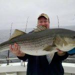 large rockfish striper striped bass Chesapeake Bay