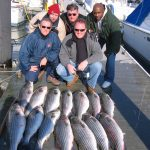 catching Striped Bass Solomon's Maryland