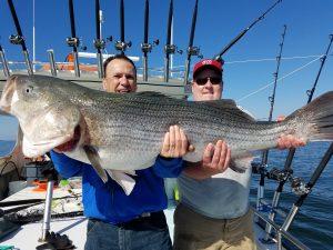 chesapeake-bay-fishing-big-rockfish-striper-catch-charter-boat